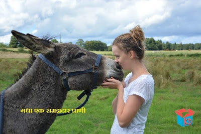 about donkey in hindi
