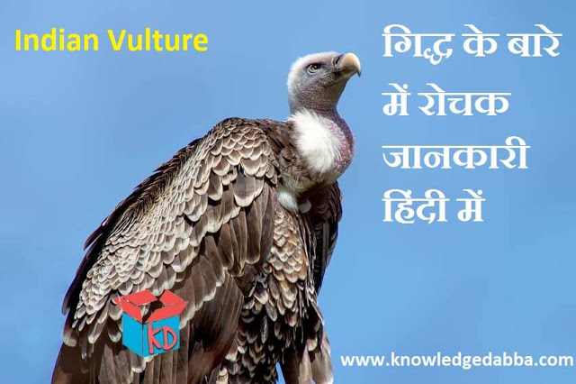 Information about Vulture In Hindi