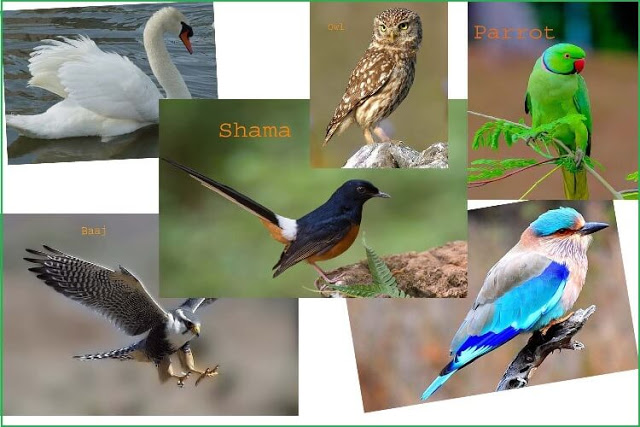 Information About Birds In Hindi