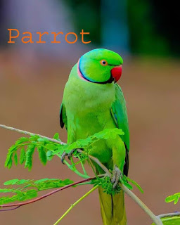 About Birds In Hindi