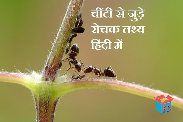 Information About Ant In Hindi