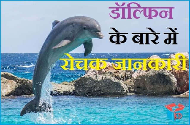 Information About Dolphin In Hindi