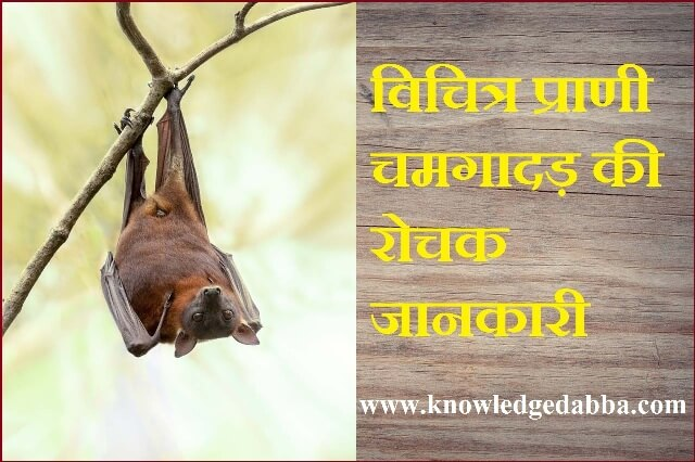 Bat Animal In Hindi