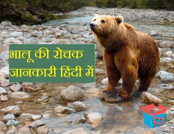 bear information in hindi
