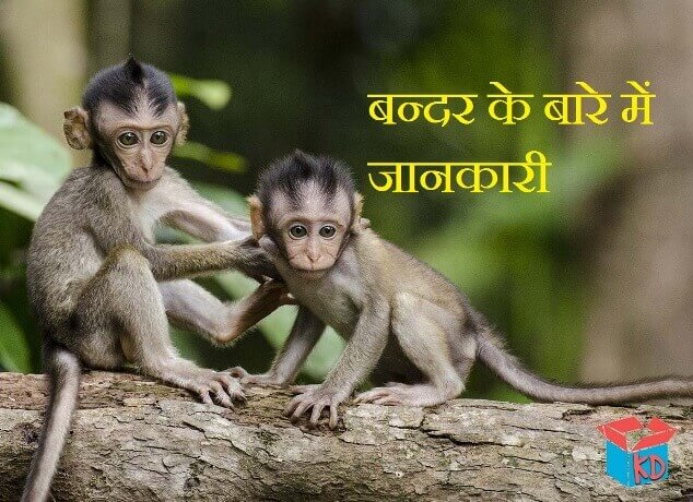 information about monkey in hindi