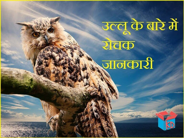 information about owl in hindi