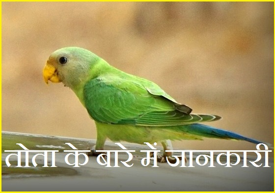 information about parrot in hindi