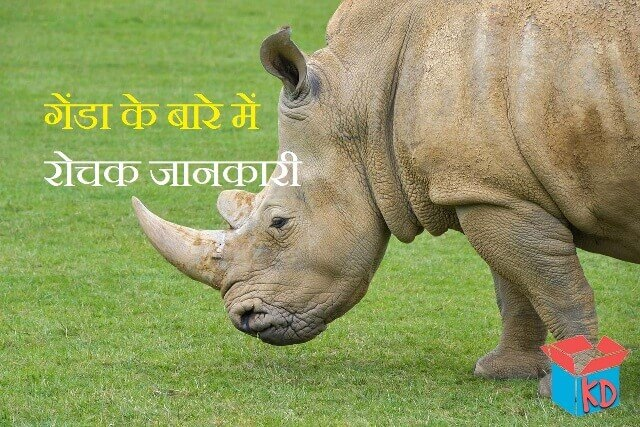 Rhinoceros In hindi