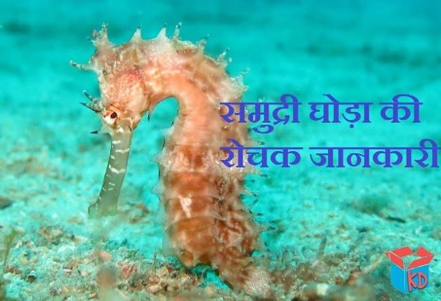seahorse in hindi