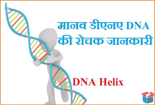 what is dna in hindi