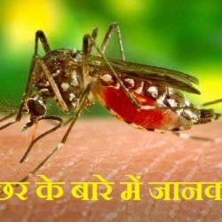 Mosquito In Hindi