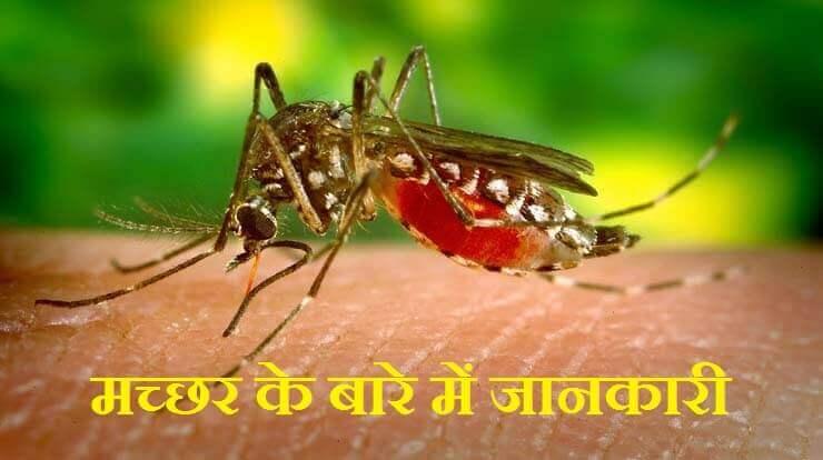 मच्छर के बारे में जानकारी