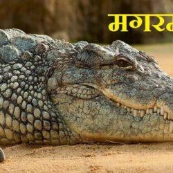 Crocodile In Hindi