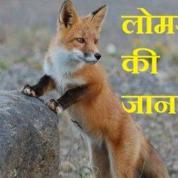 Fox Information In Hindi