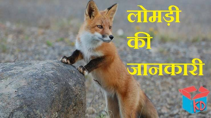 Fox Information In Hindi