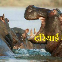 Hippopotamus Information In Hindi
