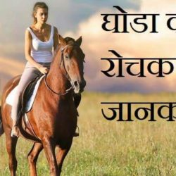 Information About Horse In Hindi