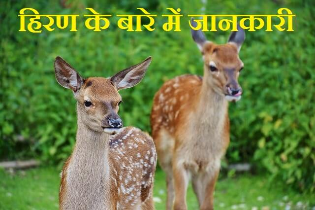 Information About Deer In Hindi