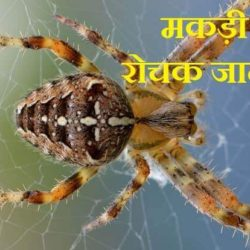 Spider In Hindi
