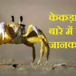 crab information in hindi