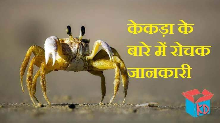 crab information in hindi