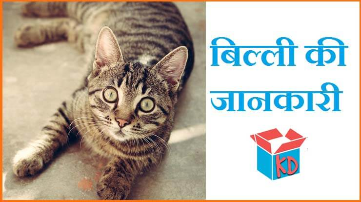 information about cat in hindi