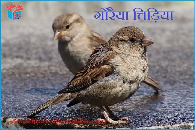 Information about sparrow in hindi