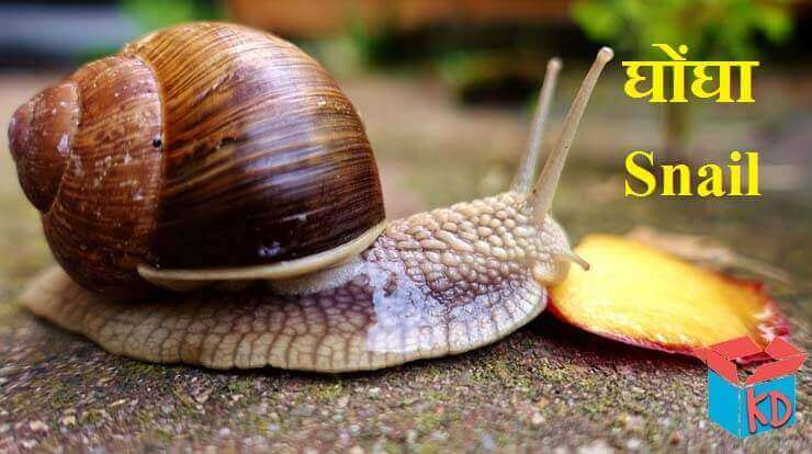 snail in hindi