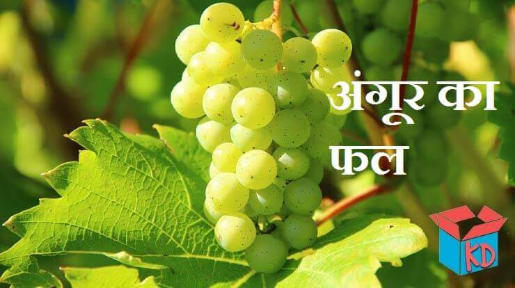 Grapes Information In Hindi