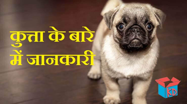 Information About Dog In Hindi