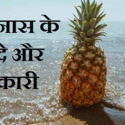 Pineapple Information In Hindi