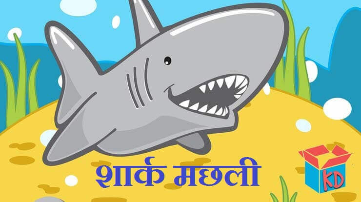 Shark In Hindi