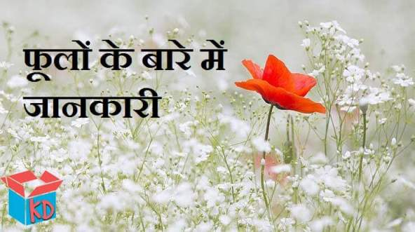 Information About Flowers In Hindi