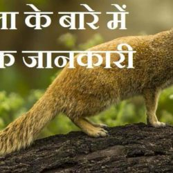 Mongoose In Hindi