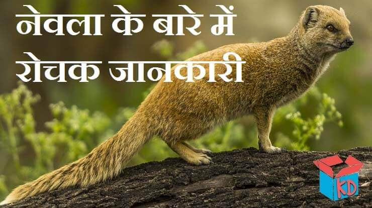 Mongoose In Hindi