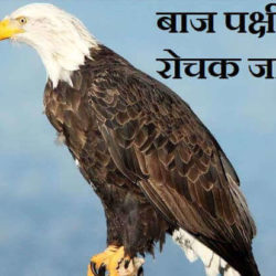 Information About Eagle In Hindi
