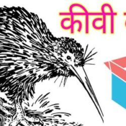 Information About Kiwi Bird In Hindi