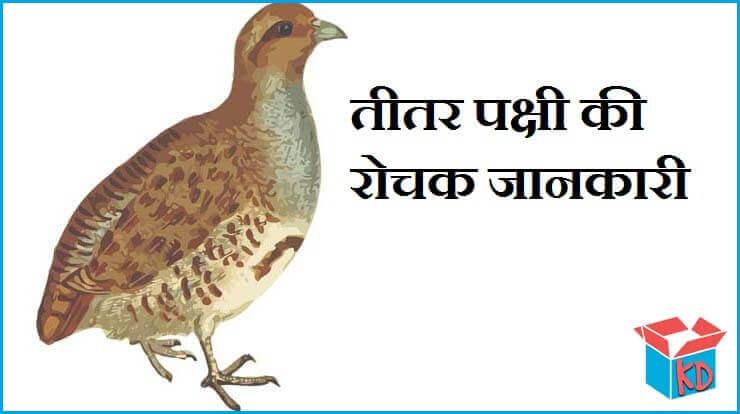 Teetar Bird Information In Hindi