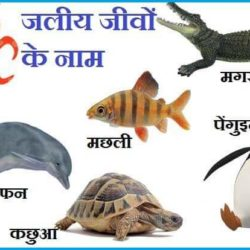 Water Animals Name In Hindi
