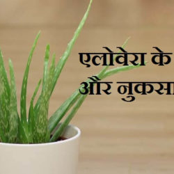 Aloe Vera In Hindi