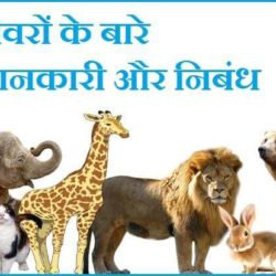 Information About Animals In Hindi