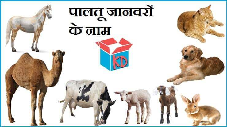 Name Of Domestic Animals In Hindi