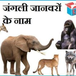 Name Of Wild Animals In Hindi