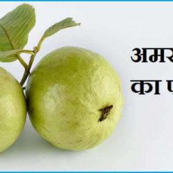 Guava Fruit In Hindi