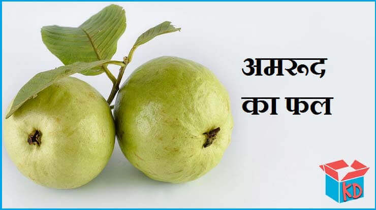 Guava Fruit In Hindi