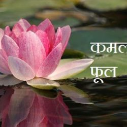Information About Lotus In Hindi