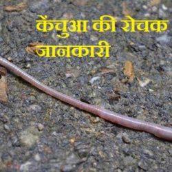 Earthworm In Hindi
