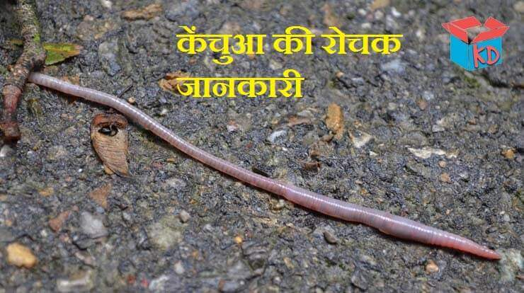 Earthworm In Hindi