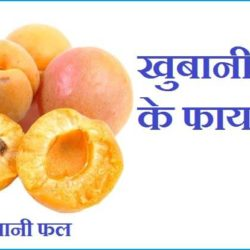 Apricot Fruit In Hindi