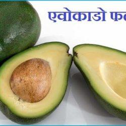 Avocado Fruit In Hindi